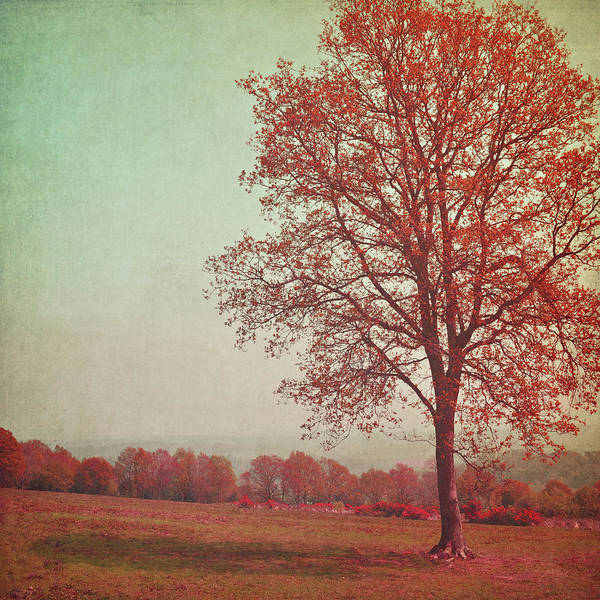 Randle Photograph - Autumn Tree With Shadow by Photo - Lyn Randle