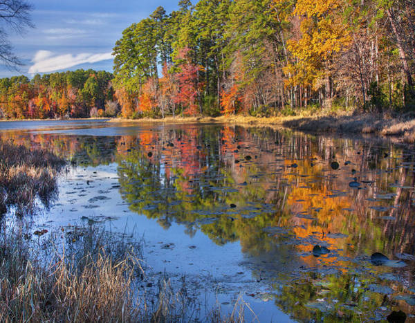 Photograph - Autumn Trees Along Lake, Daingerfield by