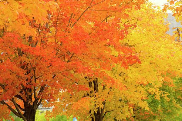 Quebec City Photograph - Autumn Trees In City Park by Jean-pierre Lescourret