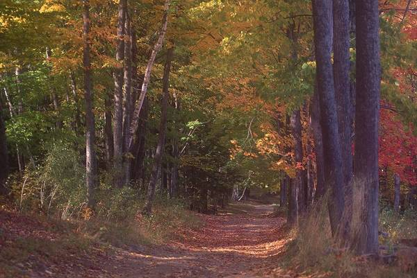 New England Autumn Photograph - Autumn Trees In Vermont by Sally Brown