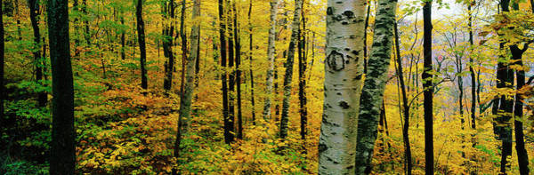 Wall Art - Photograph - Autumn Trees Ma by Panoramic Images