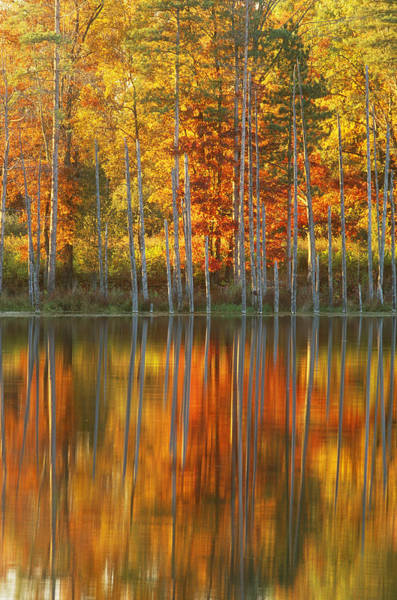Wall Art - Photograph - Autumn Trees by Michael Lustbader
