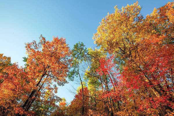 Photograph - Autumn Trees by Todd Klassy