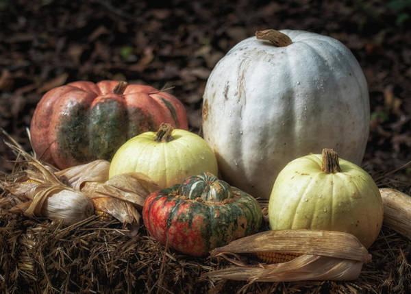 Pumkin Wall Art - Photograph - Autumn Vision by James Barber