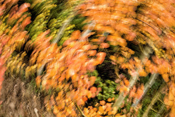 Photograph - Autumn Vortex by Denise Bush
