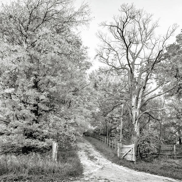Juxtaposition Photograph - Autumn Wandering - Ontario Backroads 4 Bw by Steve Harrington
