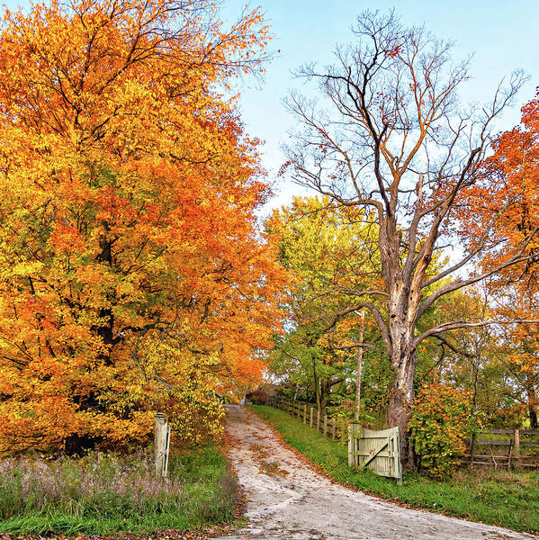 Juxtaposition Photograph - Autumn Wandering - Ontario Backroads 4 by Steve Harrington