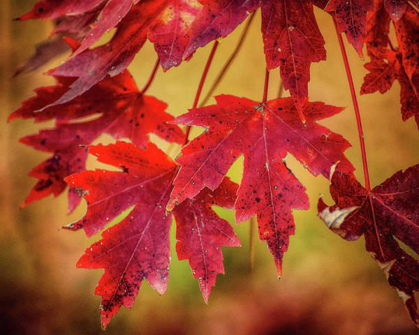 Autumn Watch Art Print