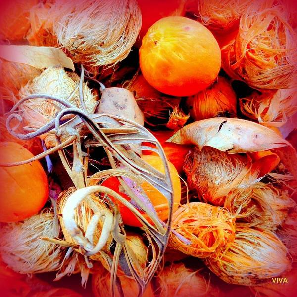 Photograph - Autumn Windfall by VIVA Anderson