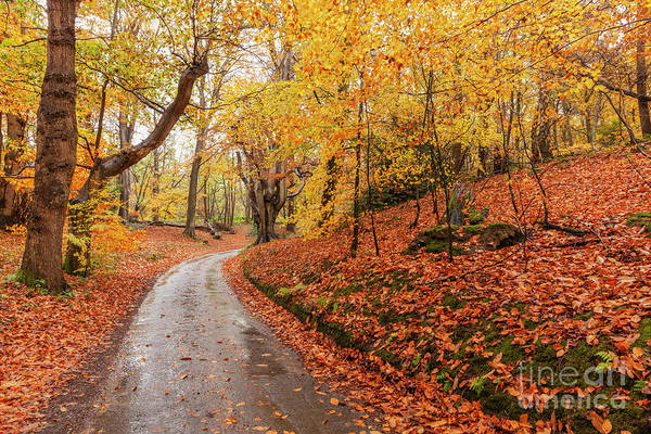 Wall Art - Photograph - Autumn Woodland And Winding Rural Road by Simon Bratt Photography LRPS