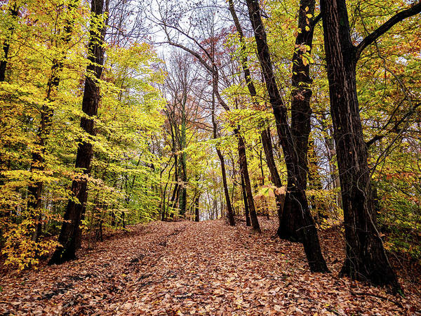 Photograph - Autumn Woods by Louis Dallara