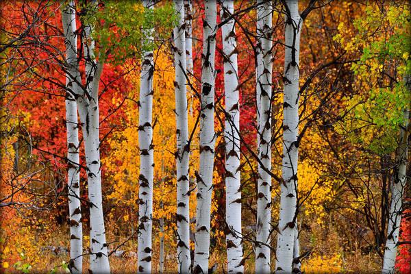Wall Art - Photograph - Autumn Woods by Michael Morse
