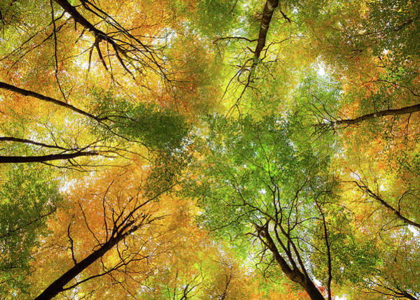 Photograph - Autumnal Display by Dave Bowman