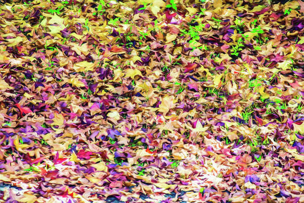 Wall Art - Photograph - Autumnal Leaves by Sheila Smart Fine Art Photography