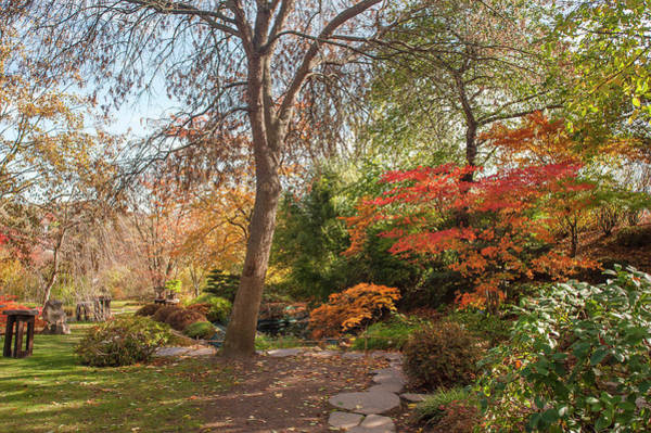 Photograph - Autumnal Path Through Japanese Garden by Jenny Rainbow