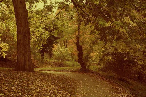 Photograph - Autumnal Secret Garden by Jenny Rainbow