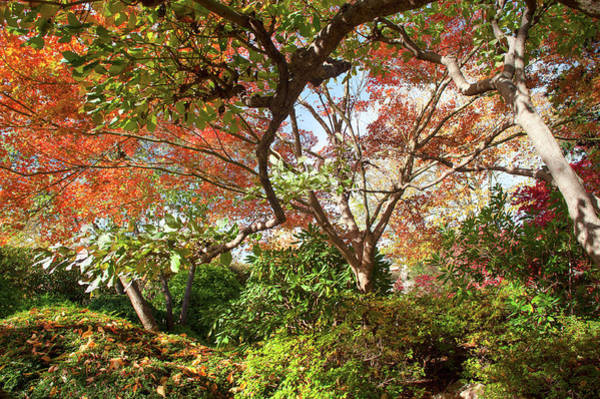 Photograph - Autumnal Trees Of Japanese Garden by Jenny Rainbow