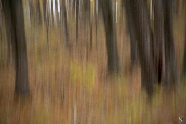 Photograph - Autumnal Trunks by John Meader