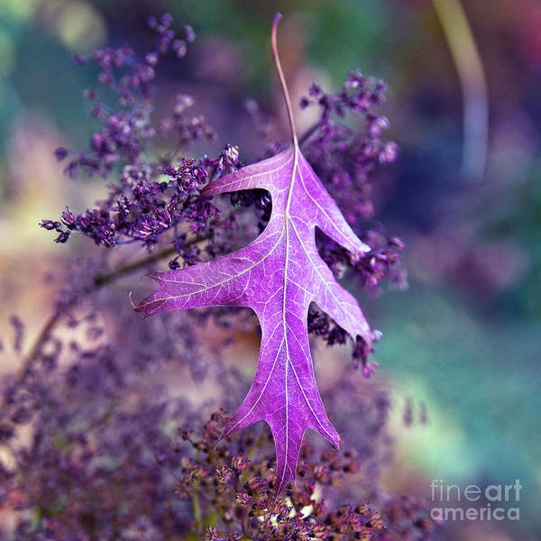 Photograph - Autumnal Ultra Violet Sound by Silva Wischeropp