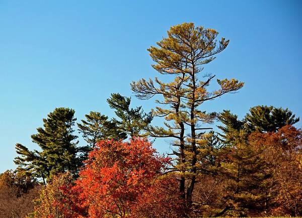 Photograph - Autumn Now by Allen Nice-Webb