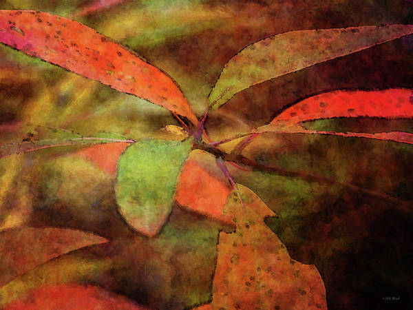 Photograph - Autumns Abstract 6217 Idp_2 by Steven Ward