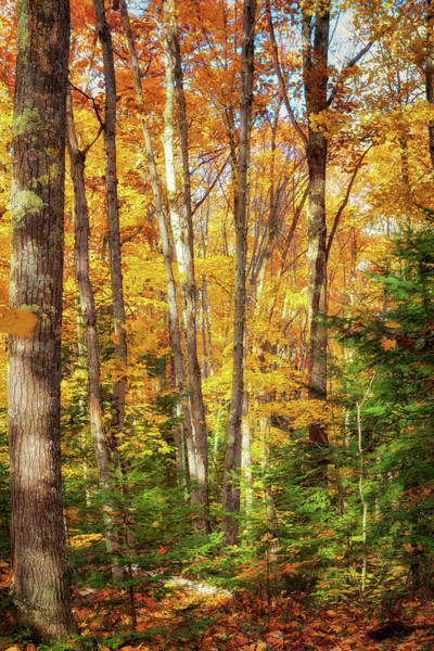 Photograph - Autumn's Glory by Susan Rissi Tregoning