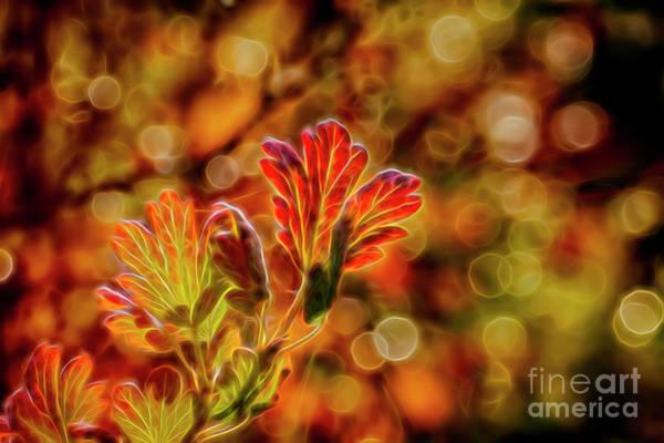 Fall Colors Digital Art - Autumn's Glow 2 by Veikko Suikkanen