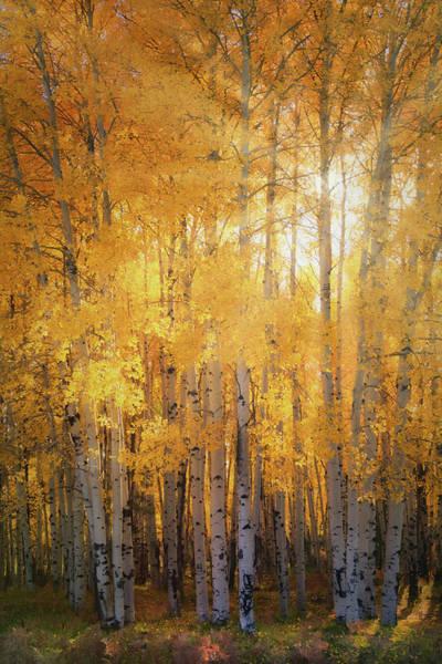 Wall Art - Photograph - Autumn's Golden Light  by Saija Lehtonen
