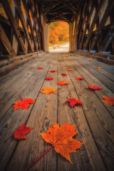 Photograph - Autumn's Path by Robert Clifford