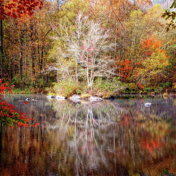 Photograph - Autumn's Peak In Square by Debra and Dave Vanderlaan