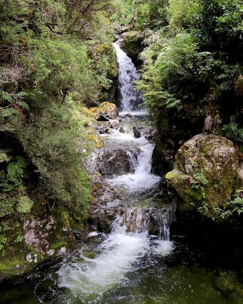 Photograph - Avalanche Creek Waterfall, Arthurs Pass, New Zealand by Sarah Lilja