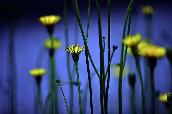 Selective Focus Photograph - Avatar Flowers by Mauro Cociglio - Turin - Italy