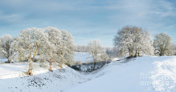 Photograph - Avebury Winter Beeches by Tim Gainey