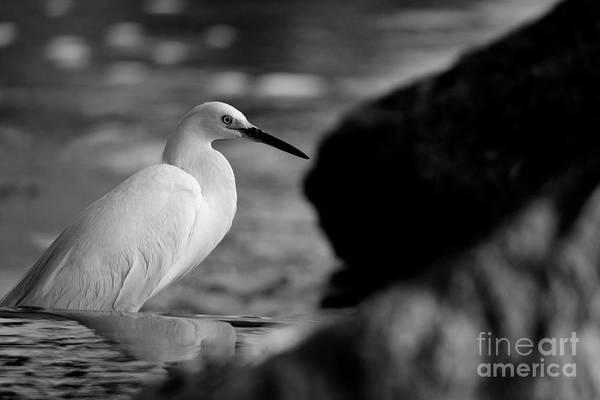Photograph - Avian Illumination by John F Tsumas