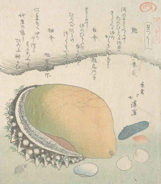 Relief - Awabi And Various Shells by Totoya Hokkei