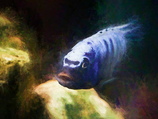 Digital Art - Awesome Blue Zebra Cichlid by Don Northup