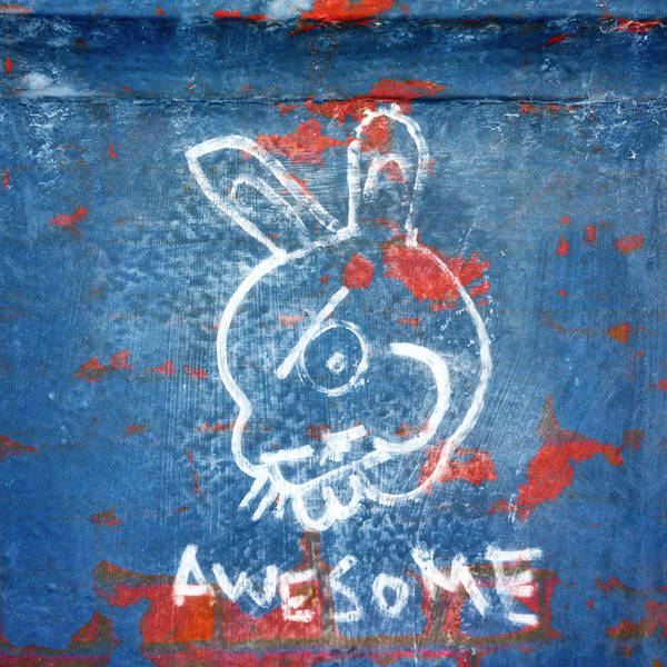 Wall Art - Photograph - Awesome Bunny Graffiti by Carol Leigh