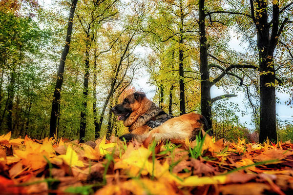 Photograph - Axel Among Autumnal Leaves by Roberto Pagani