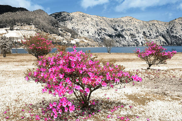 Wall Art - Photograph - Azaleas In Dry Land by Gaspar Avila