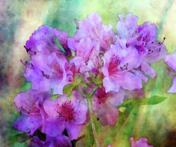 Photograph - Azaleas In The Morning 6498 Idp_2 by Steven Ward