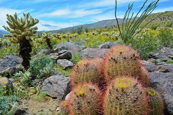 Photograph - Azna Borrego Desert Cactus by Kyle Hanson
