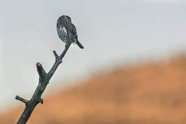 Photograph - B1 by Joshua Able's Wildlife