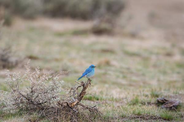 Photograph - B10 by Joshua Able's Wildlife