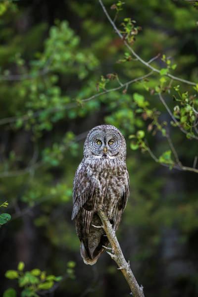 Photograph - B16 by Joshua Able's Wildlife
