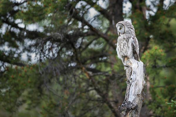 Photograph - B17 by Joshua Able's Wildlife