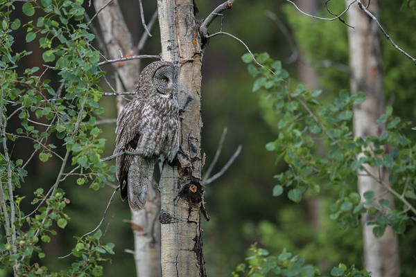 Photograph - B18 by Joshua Able's Wildlife