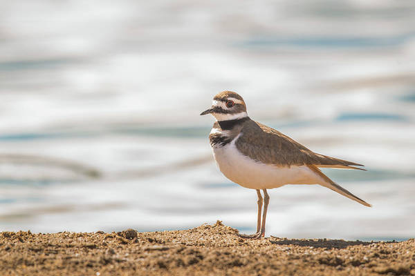 Photograph - B3 by Joshua Able's Wildlife