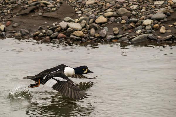 Photograph - B6 by Joshua Able's Wildlife