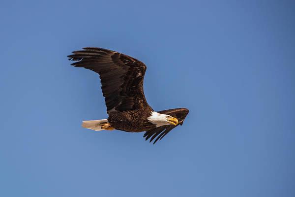 Photograph - B8 by Joshua Able's Wildlife