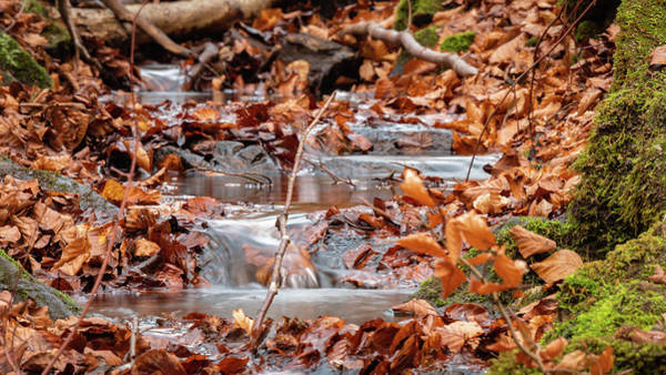 Wall Art - Photograph - Babbling Stream At Judy Woods by Mike Walker